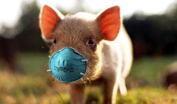 Germicidals / Disinfectants / Animal Bio Security