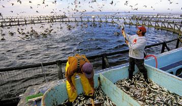 Aqua Culture Industry